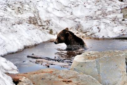 Just Grizz & Bear It