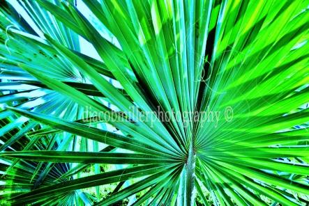 Perfect Palm